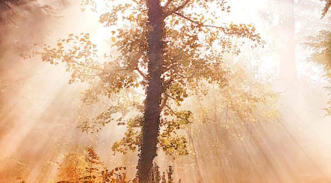 Die Umgebung unseres Blótplatz im Herbst